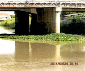 タイのホテイアオイの異常発生2
